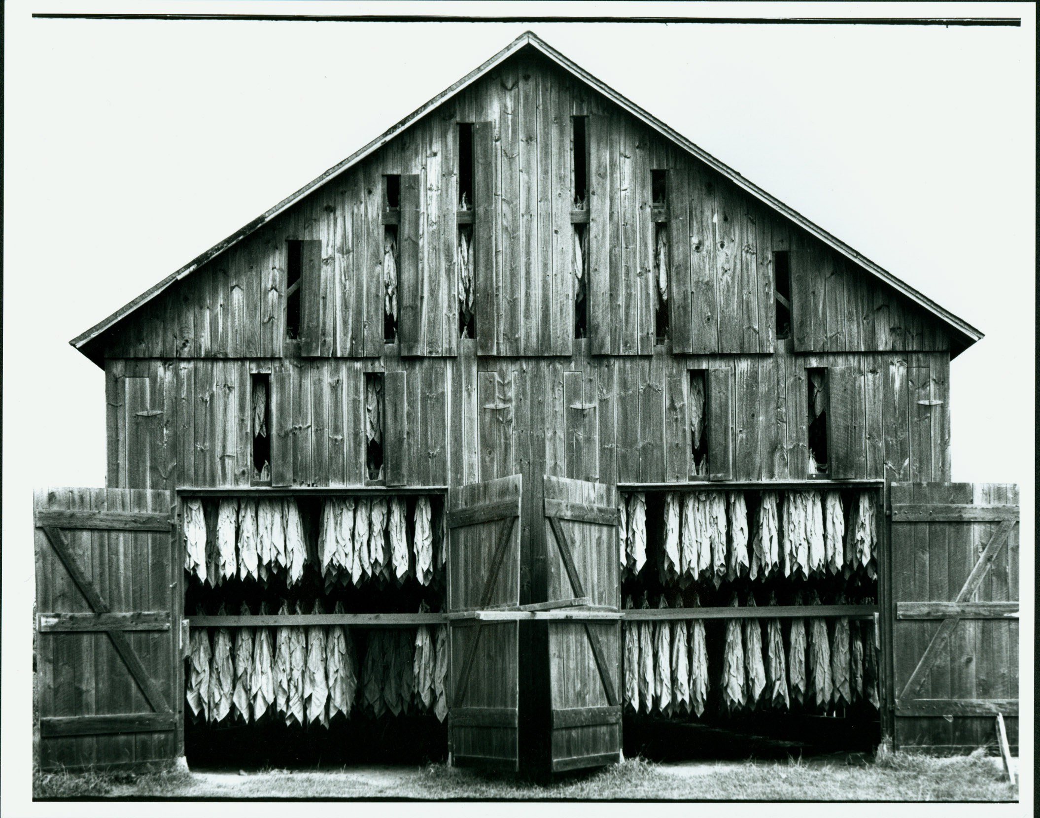 Tobacco Shed